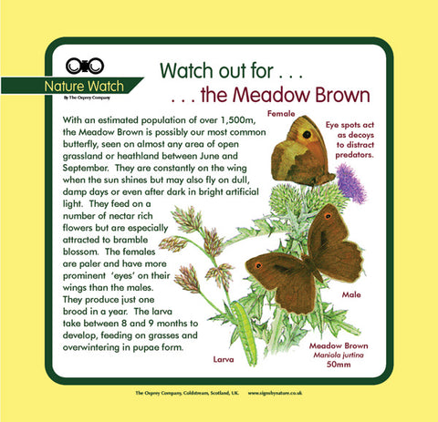 'Meadow brown' Nature Watch Panel