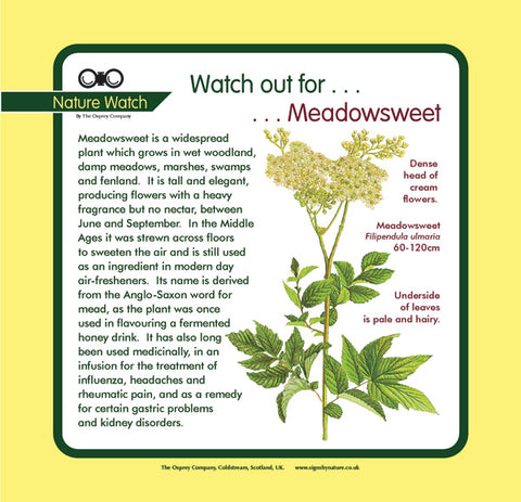 'Meadowsweet' Nature Watch Panel