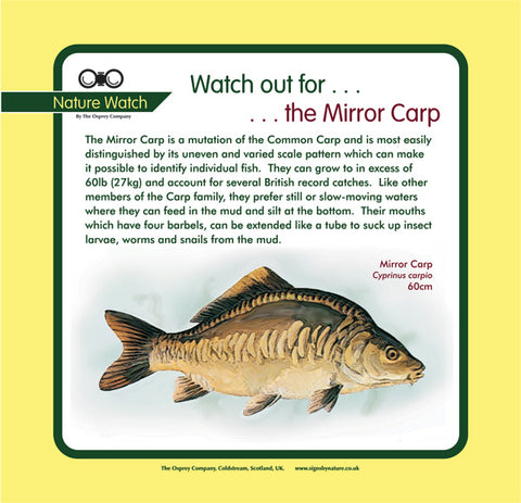 'Mirror carp' Nature Watch Panel