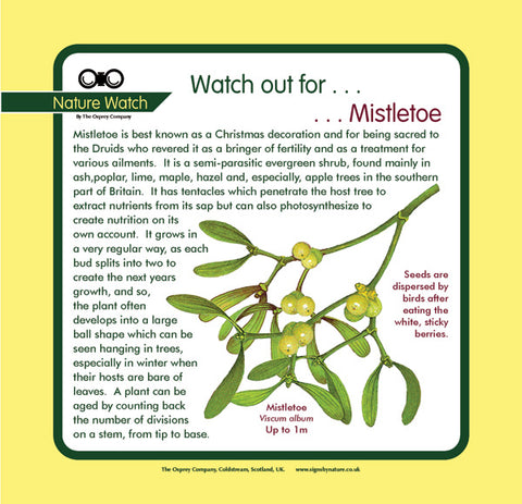 'Mistletoe' Nature Watch Panel