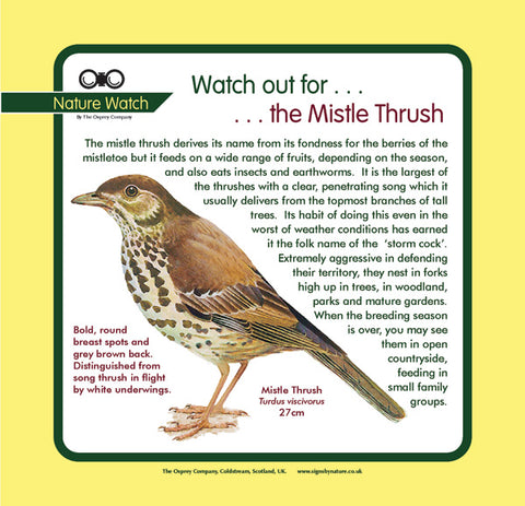 'Mistle thrush' Nature Watch Panel