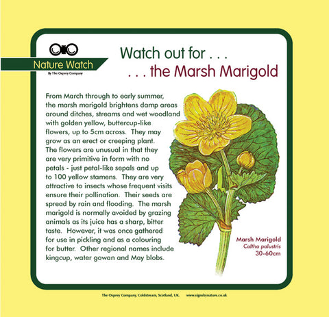 'Marsh marigold' Nature Watch Panel