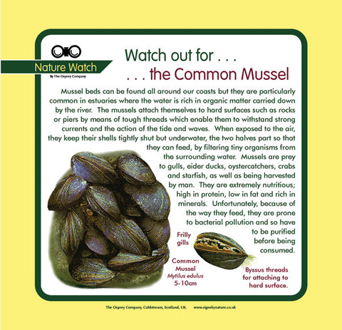 'Mussels' Nature Watch Panel