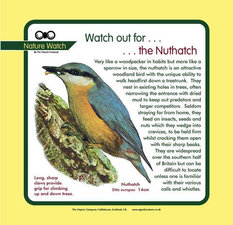'Nuthatch' Nature Watch Panel