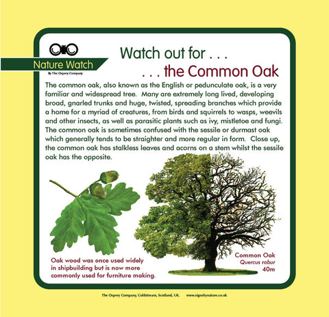 'Common oak' Nature Watch Panel