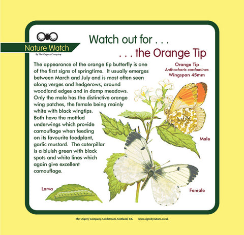 'Orange tip' Nature Watch Panel