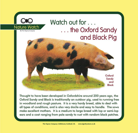 'Oxford sandy and black pig' Nature Watch Panel