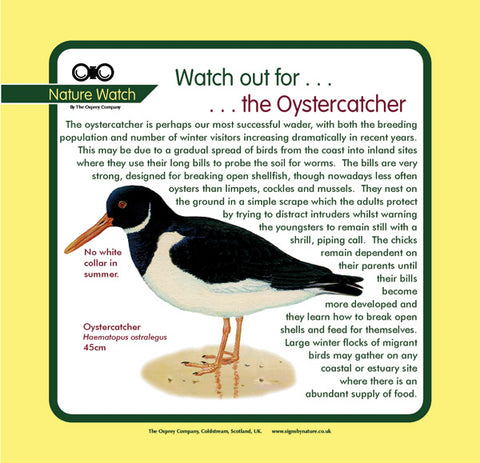 'Oystercatcher' Nature Watch Panel