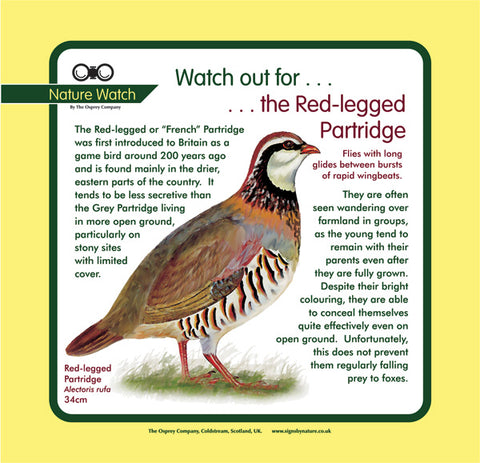 'Red-legged partridge' Nature Watch Panel
