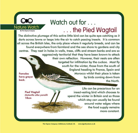 'Pied wagtail' Nature Watch Panel
