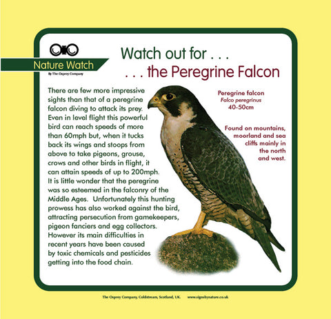 'Peregrine falcon' Nature Watch Panel