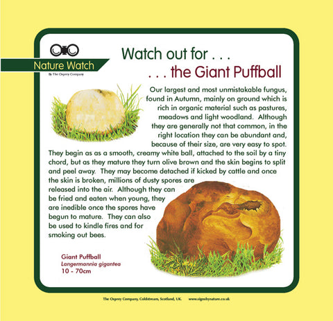 'Giant puffball' Nature Watch Panel