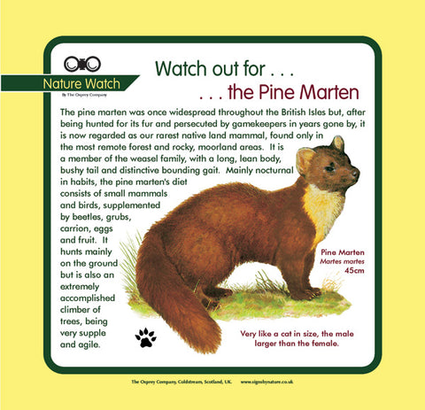 'Pine marten' Nature Watch Panel