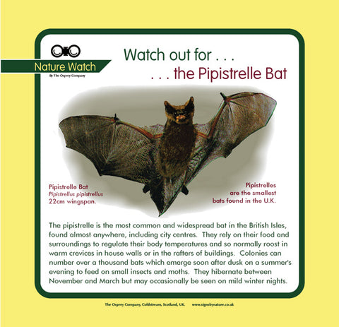 'Pipistrelle bat' Nature Watch Panel