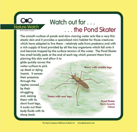 'Pond skater' Nature Watch Panel