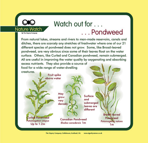 'Pondweed' Nature Watch Panel