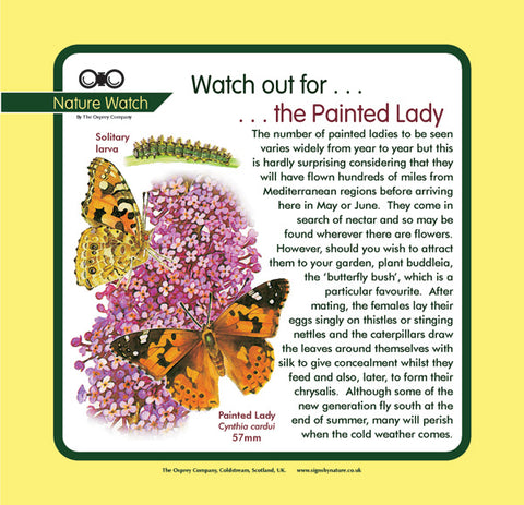 'Painted lady' Nature Watch Panel