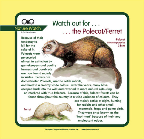 'Polecat/ferret' Nature Watch Panel