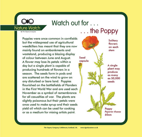 'Poppy' Nature Watch Panel