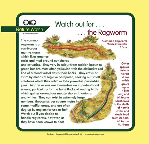 'Ragworm' Nature Watch Panel