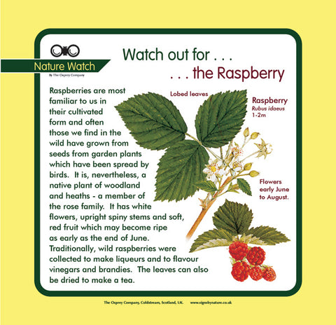 'Raspberry' Nature Watch Panel