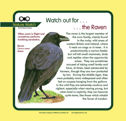 'Raven' Nature Watch Panel