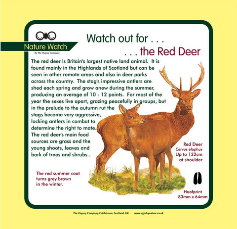 'Red deer' Nature Watch Panel
