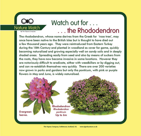 'Rhododendron' Nature Watch Panel