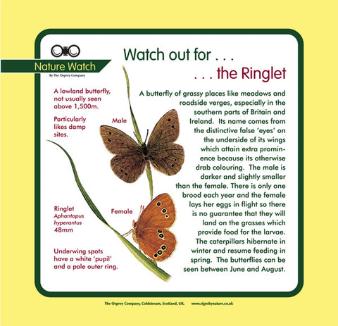 'Ringlet' Nature Watch Panel
