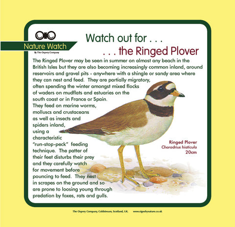 'Ringed plover' Nature Watch Panel