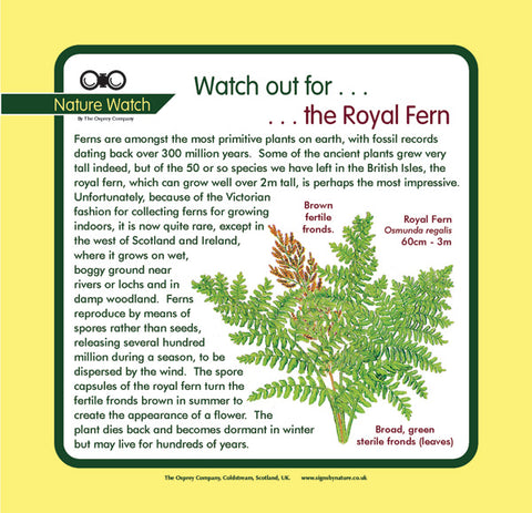 'Royal fern' Nature Watch Panel
