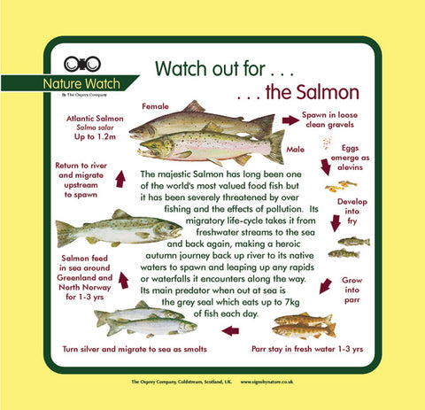 'Salmon' Nature Watch Panel