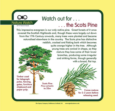 'Scots pine' Nature Watch Panel
