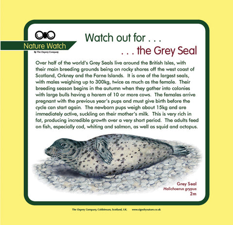 'Grey seal' Nature Watch Panel