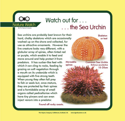 'Sea urchin' Nature Watch Panel