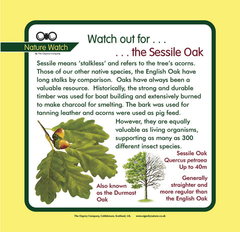 'Sessile oak' Nature Watch Panel