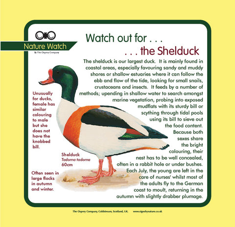 'Shelduck' Nature Watch Panel
