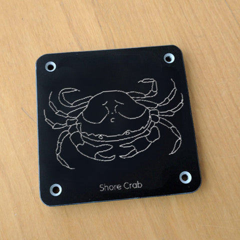 'Shore crab' rubbing plaque