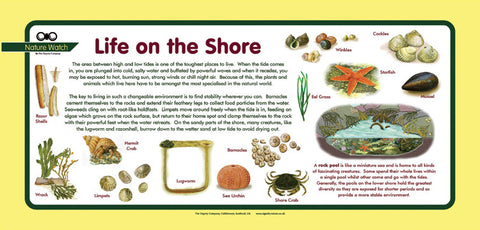 'Sea shore' Nature Watch Plus Panel