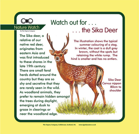 'Sika deer' Nature Watch Panel