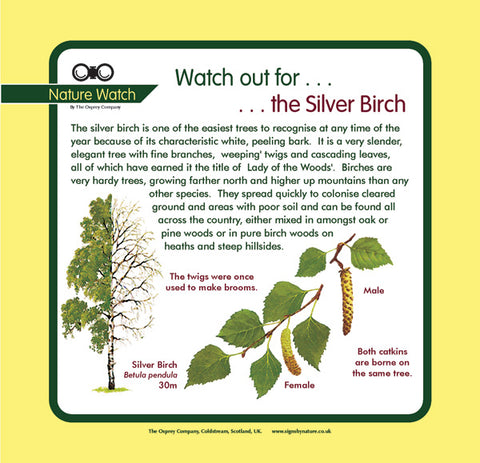 'Silver birch' Nature Watch Panel
