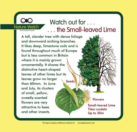'Small-leaved lime' Nature Watch Panel