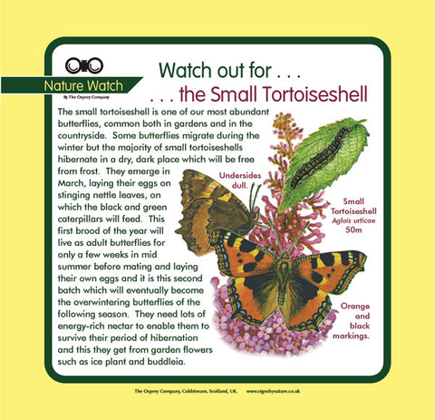 'Small tortoiseshell' Nature Watch Panel