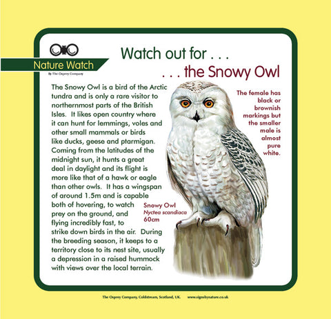 'Snowy owl' Nature Watch Panel