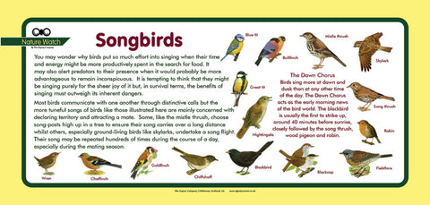'Songbirds' Nature Watch Plus Panel