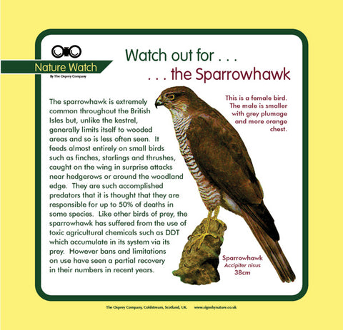 'Sparrowhawk' Nature Watch Panel