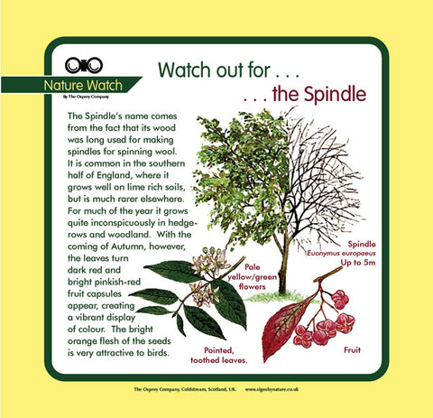 'Spindle' Nature Watch Panel