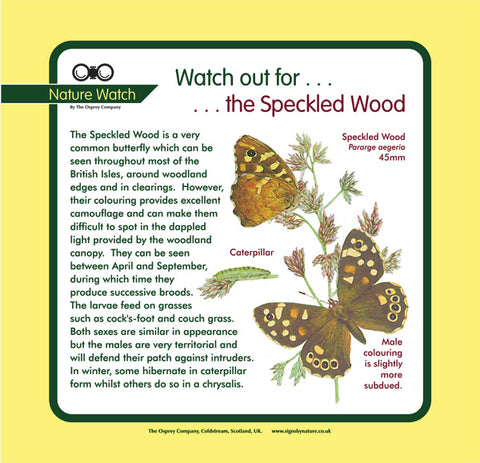 'Speckled wood' Nature Watch Panel