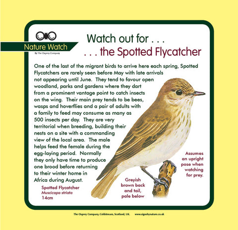 'Spotted flycatcher' Nature Watch Panel
