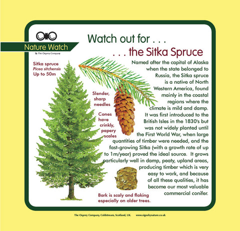 'Sitka spruce' Nature Watch Panel